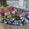 花壇に春の花