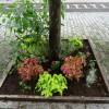 真夏に向けて4回の花壇手入れ