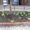 ハーブガーデン、花壇のベンチ、センター花壇ができた