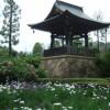 ウォーキングで花菖蒲とアジサイの正覚寺へ