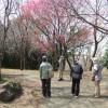 春の里山公園をウォーキング