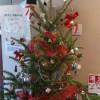 天然モミの木でクリスマスツリー
