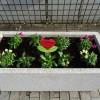 中川西小学校6年NN Police31が大人と一緒に花壇整備