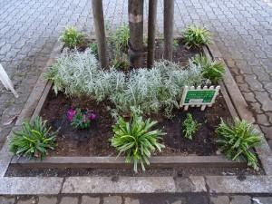 カフェスタッフがマルエツ前の花壇のヤブランを剪定し、冬の一年草を植えました