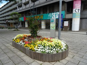 シンボル花壇は花盛り