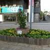 中川に「リオ・オリンピック花壇」誕生