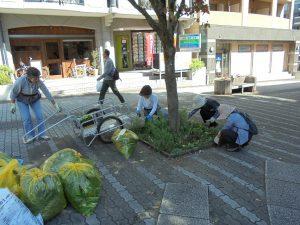 街路樹花壇の剪定作業