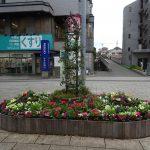 冬を彩る華やかな花壇が完成