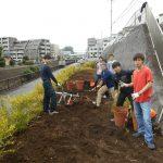 都市大生の参加で早渕川・老馬谷ガーデン(HRG)の建設進む