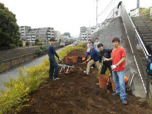 10月26日 都市大生がヒメツゲの植え込み