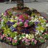 全国都市緑化よこはまフェアに向けて  NRP花壇の整備実施