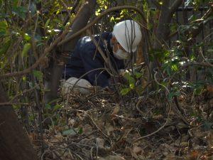 林の中に入り「クズ」のつるを根元から切ります