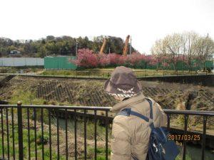 矢崎橋付近では桃の花が見られました