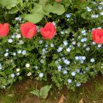 早渕川・老馬谷ガーデン:  4/29(土)草取りをしながら「花束づくり」を楽しみませんか!!?