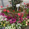 全国都市緑化よこはまフェア協賛  中川駅前商業地区は鮮やかな花でいっぱい