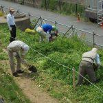 早渕川・老馬谷ガーデン(HRG)菜の花に替わり、コスモスの種をまきました
