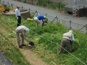 菜の花を抜いた後を耕しました