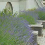 夏に向けて3回目の花壇整備と「クラフト講座」の開催