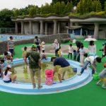 山崎公園愛護会 大勢の子供でプールのヤゴ救出作戦