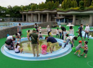 子どもプールに移したヤゴを子どもたちが救出しました