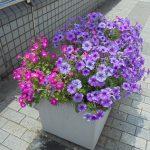 7月15日(土)中川の夏はきれいに、そして熱かった