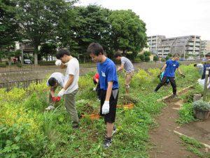 都市大学生は中央テラスの草取り