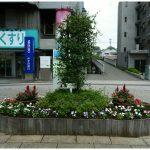 商業地区の花壇の植え替え実施