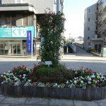 中川駅前地区の花壇は冬に向けて衣替え
