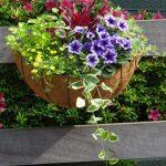 5月26日 フェスタの花かご・花はちコンテストにご参加ください