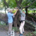 くさぶえのみちの樹木に樹名板を取り付け