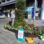 中川ルネッサンスプロジェクト  秋の花壇手入れ実施