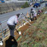 早渕川・老馬谷ガーデンにアジサイ30株を植えました