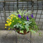 中川ふれあいフェスタ会場で花かご・花はちコンテスト開催。出品者募集中!