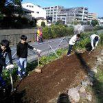 早渕川・老馬谷ガーデン 約40名で春花の種まき