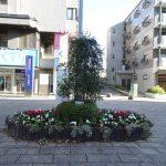 NRP 冬の中川駅前商業地区を花で美しく整備