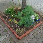 商業地区花壇の壊れた木枠を赤レンガに交換開始