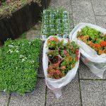 商業地区花壇は春の花植えで華やかに