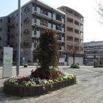 中川ルネッサンスプロジェクトはもうすぐ7周年 中川駅前商業地区の花壇の手入れ