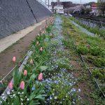 早渕川・老馬谷ガーデンはオープン3周年~参加者募集と募金しています~