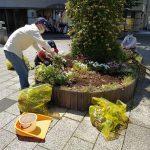 中川駅前商業地区の花壇の植え替えスタート