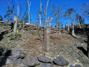 3.日が当たるように木の途中から切る台切り