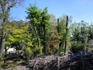 4.切られた木も1年経つと緑が復活