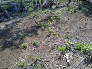 5.日が当たり新しい芽が出てきました