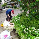 「都筑区はーとdeボランティア」の学生がNRP花壇の整備
